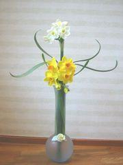 Daffodil01